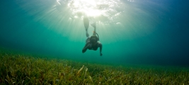 A Young woman dives down to explore the sea grass bed in Honduras.